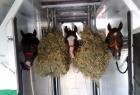 Jfk-horse