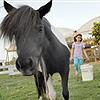 על הסוס – פרויקט יבוא 15 סוסים ננסיים לארץ